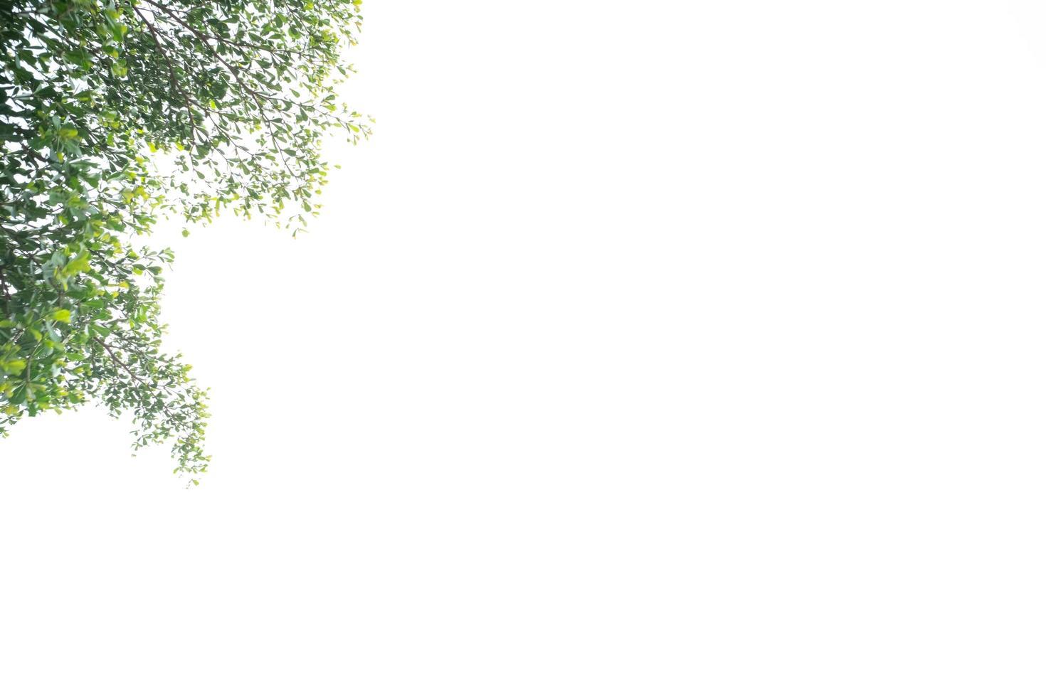 groene bladeren geïsoleerd op een witte achtergrond foto