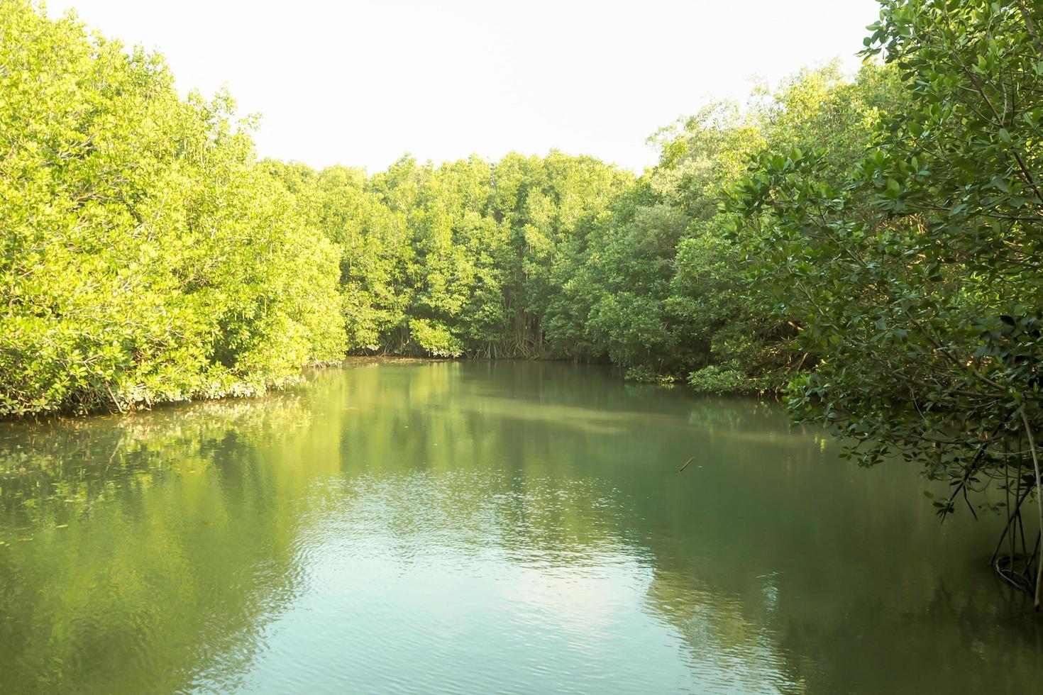 mangroove bos rivier foto