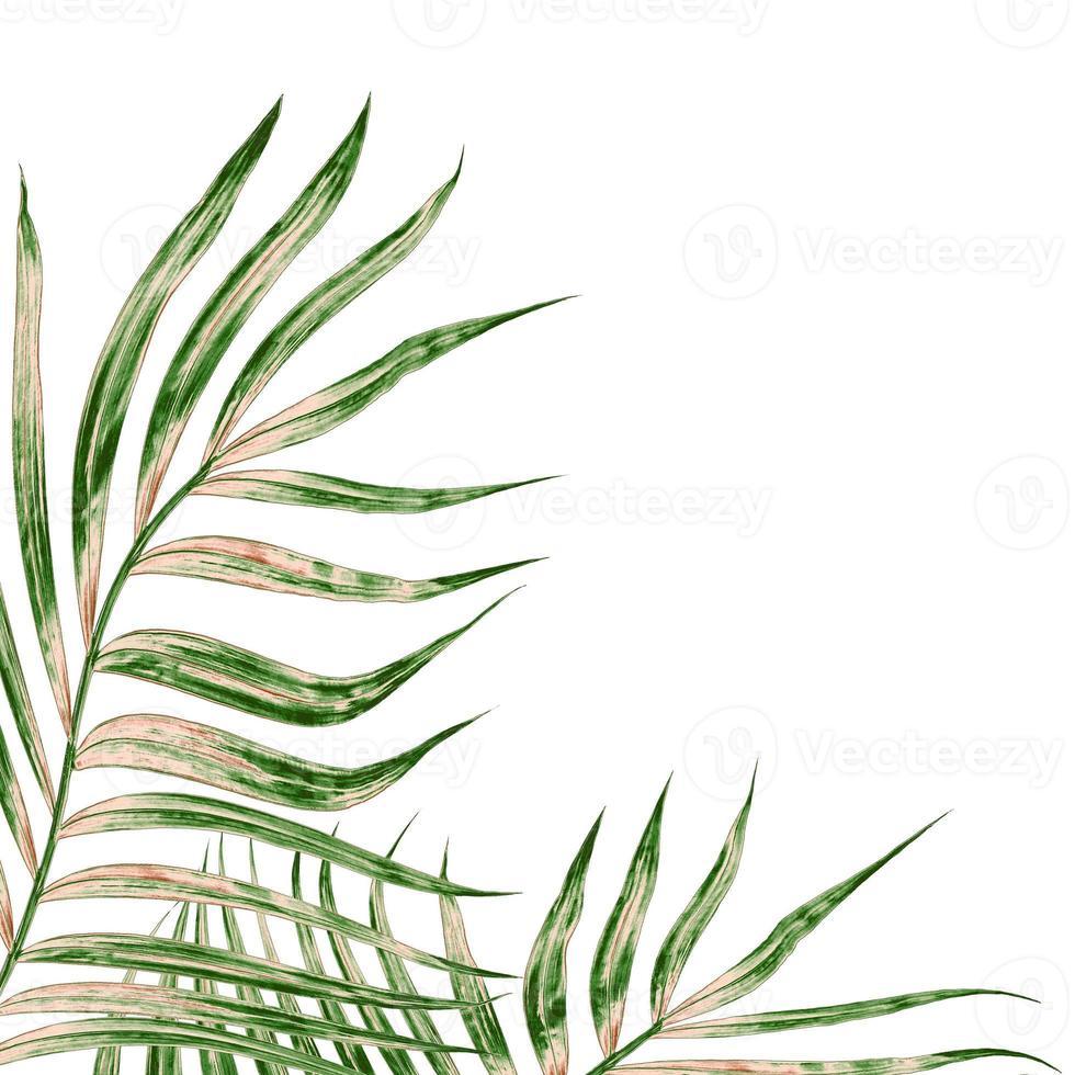 groene bladeren op een witte achtergrond foto