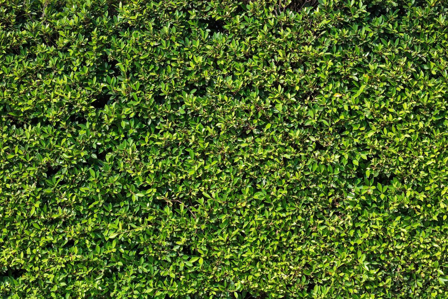 groene blad textuur achtergrond foto