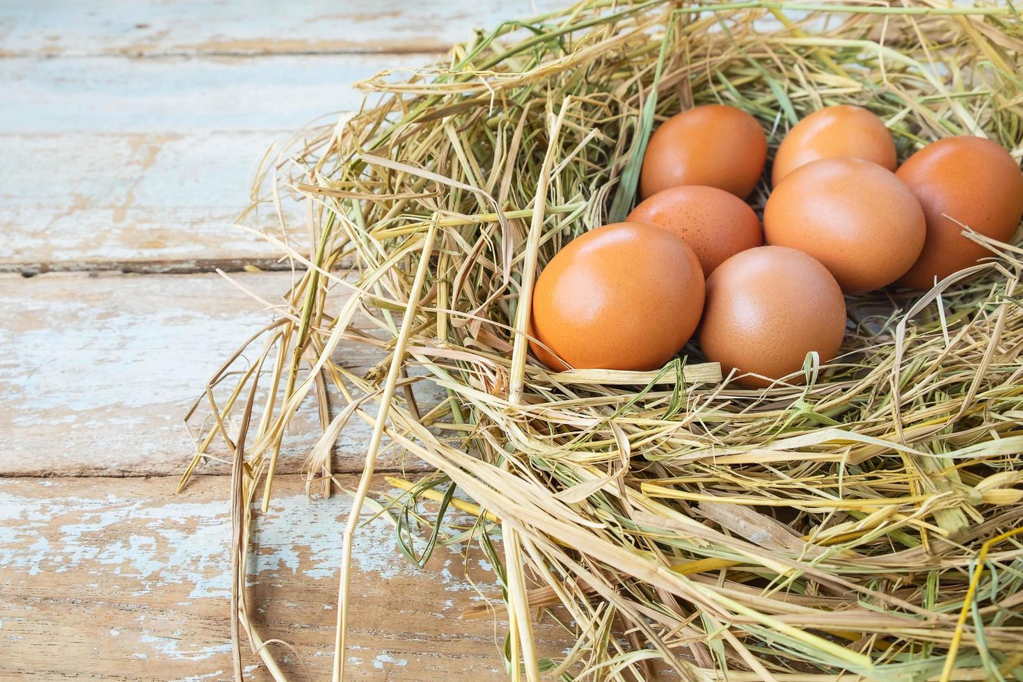 eieren in hooi foto