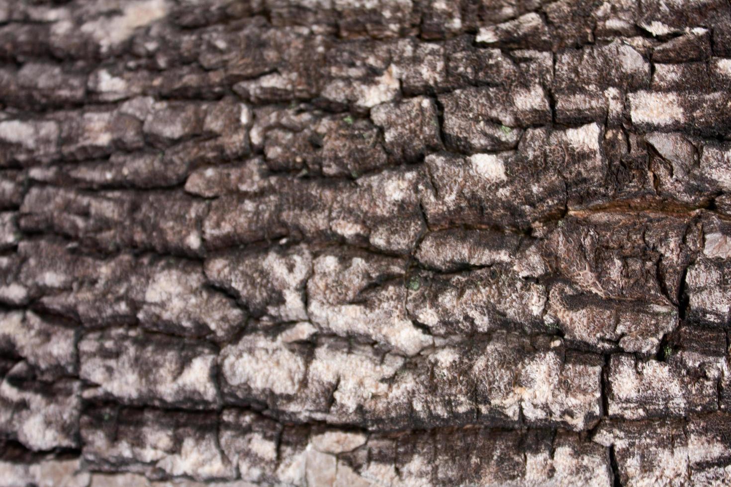 patroon van het hout foto