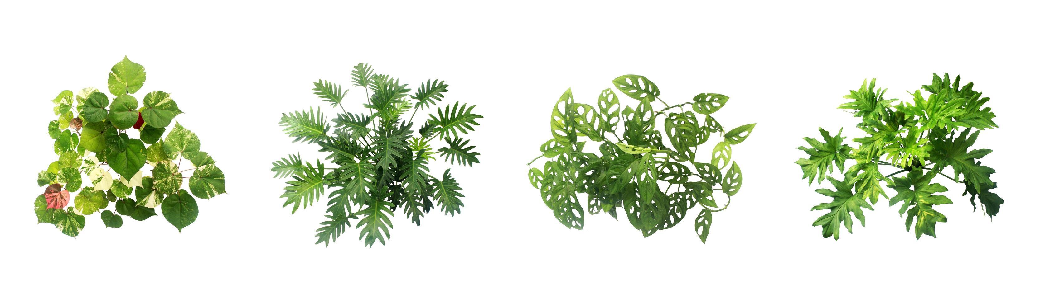 groene planten op witte achtergrond foto