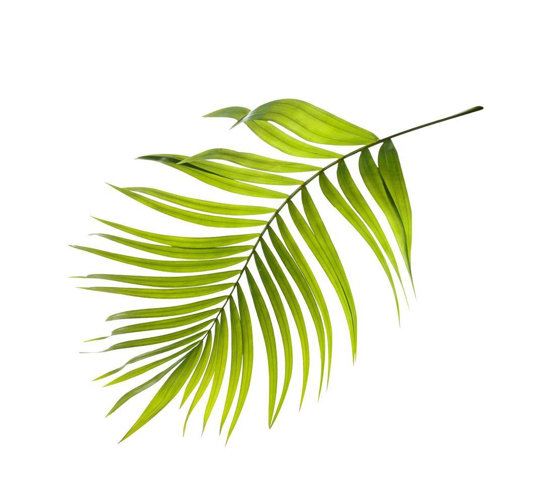 plat leggen van een palmblad foto