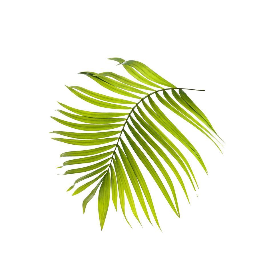 gebogen lichtgroen palmblad foto
