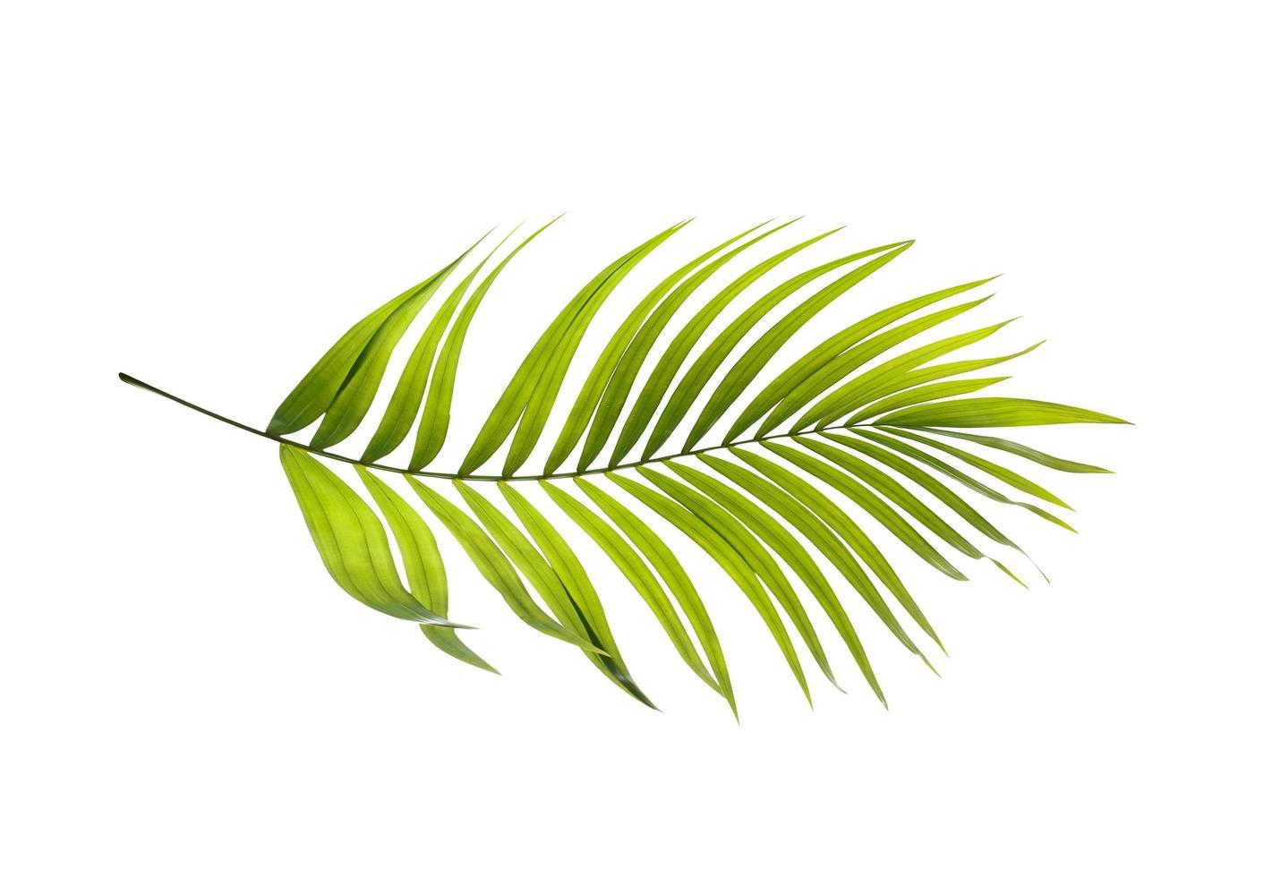 een heldergroen palmblad foto
