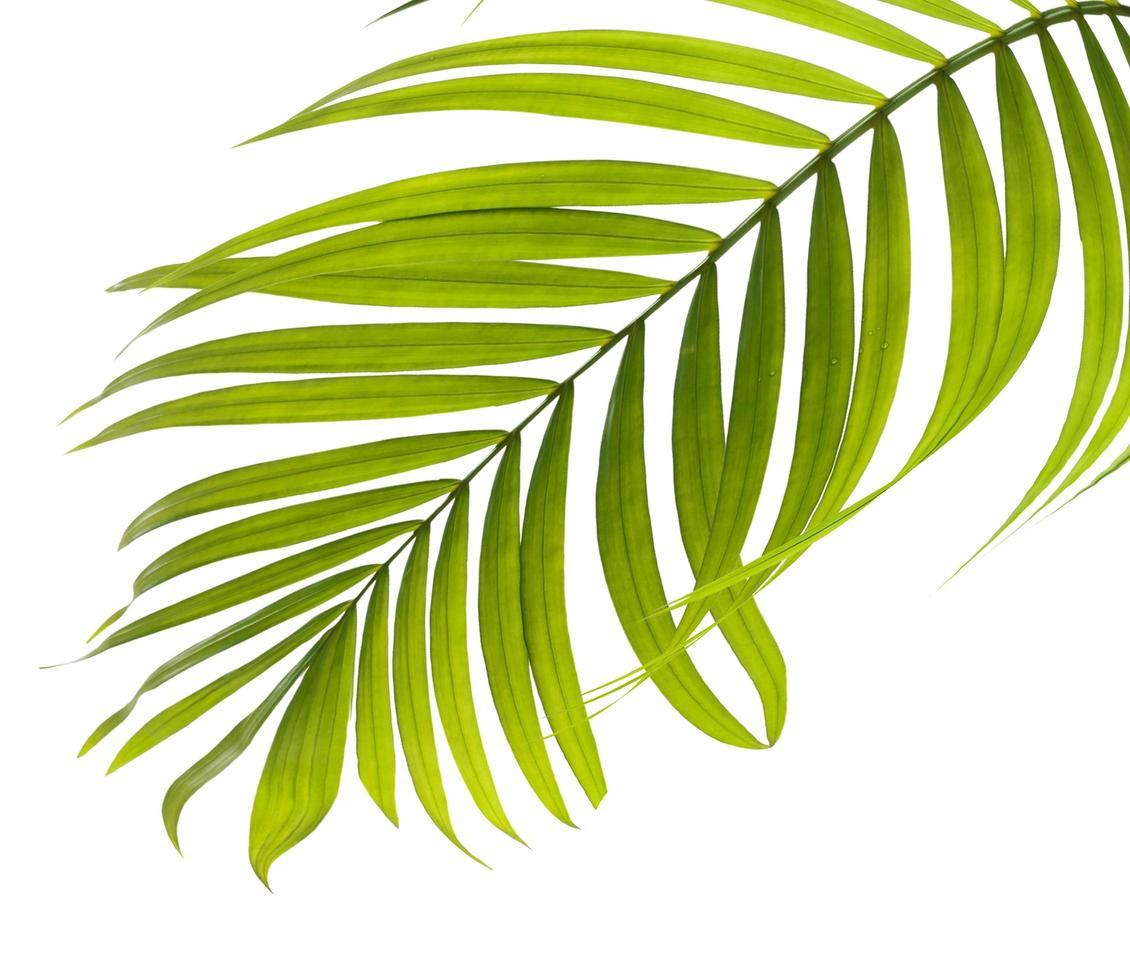 close-up van een groen tropisch blad foto