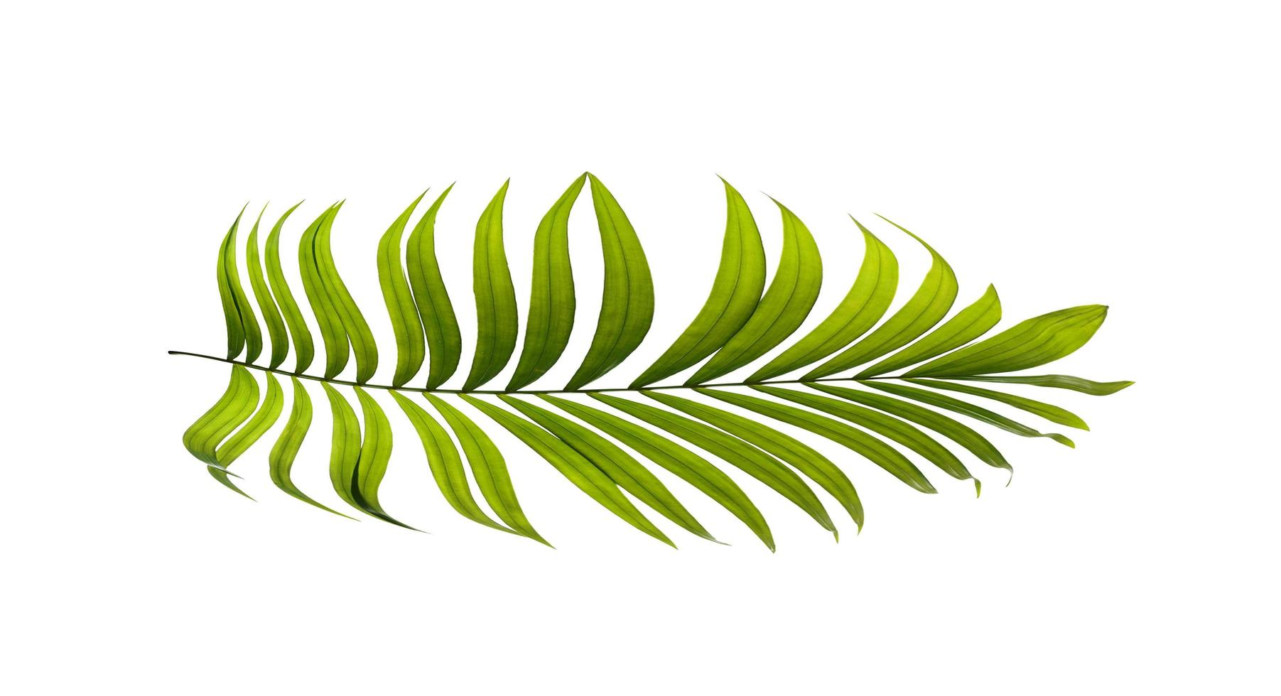 palmblad op een wit oppervlak foto