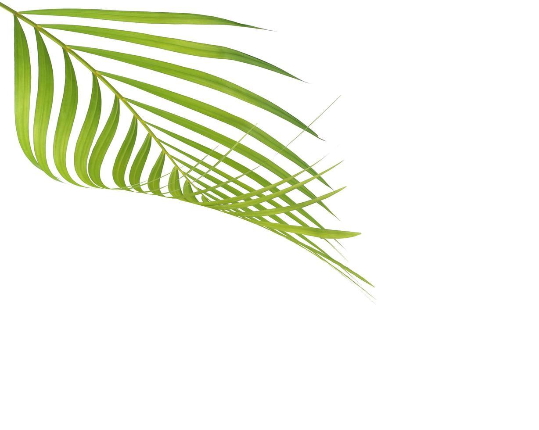 groen blad en exemplaarruimte foto