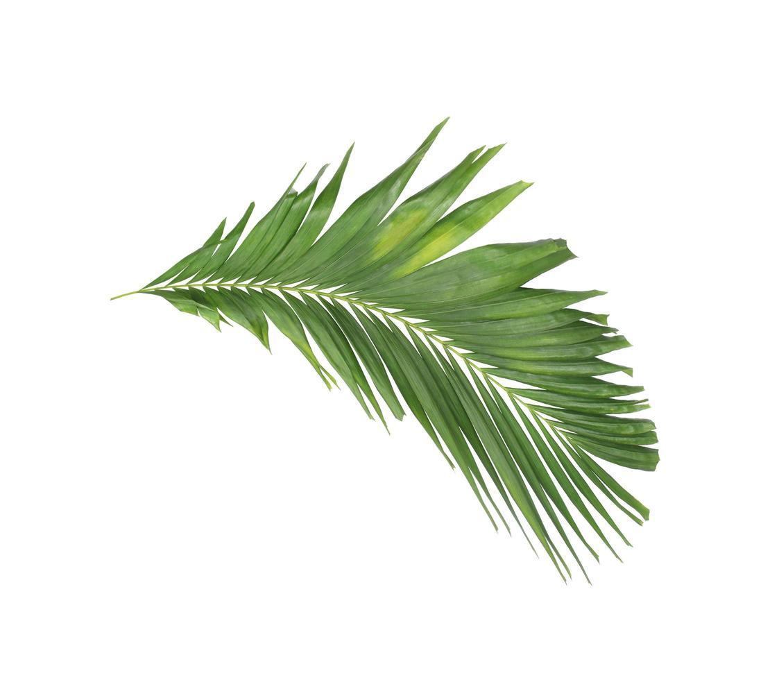 groene tropische tak foto