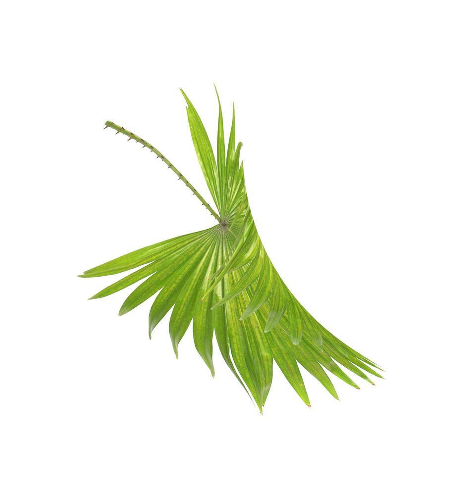 groen tropisch palmblad dat op wit wordt geïsoleerd foto