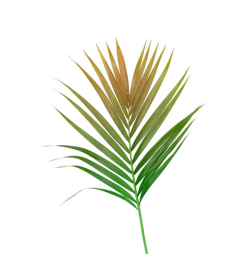 bruin en groen blad foto