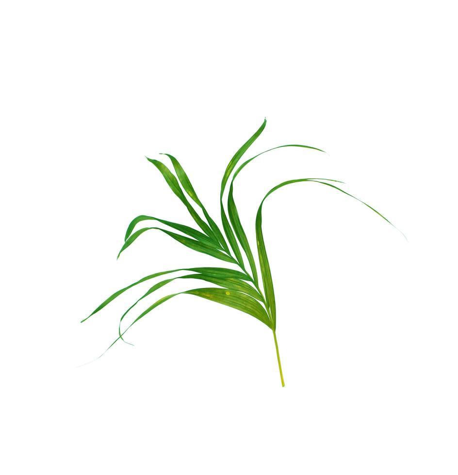 weelderig groen blad foto