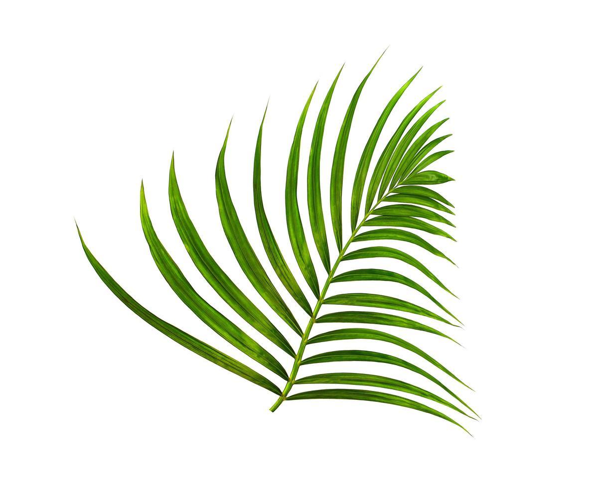weelderig tropisch groen geïsoleerd blad foto