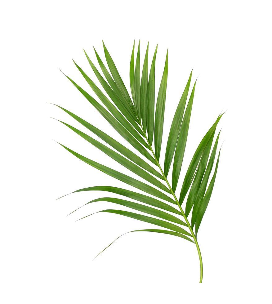 weelderig levendig groen blad foto
