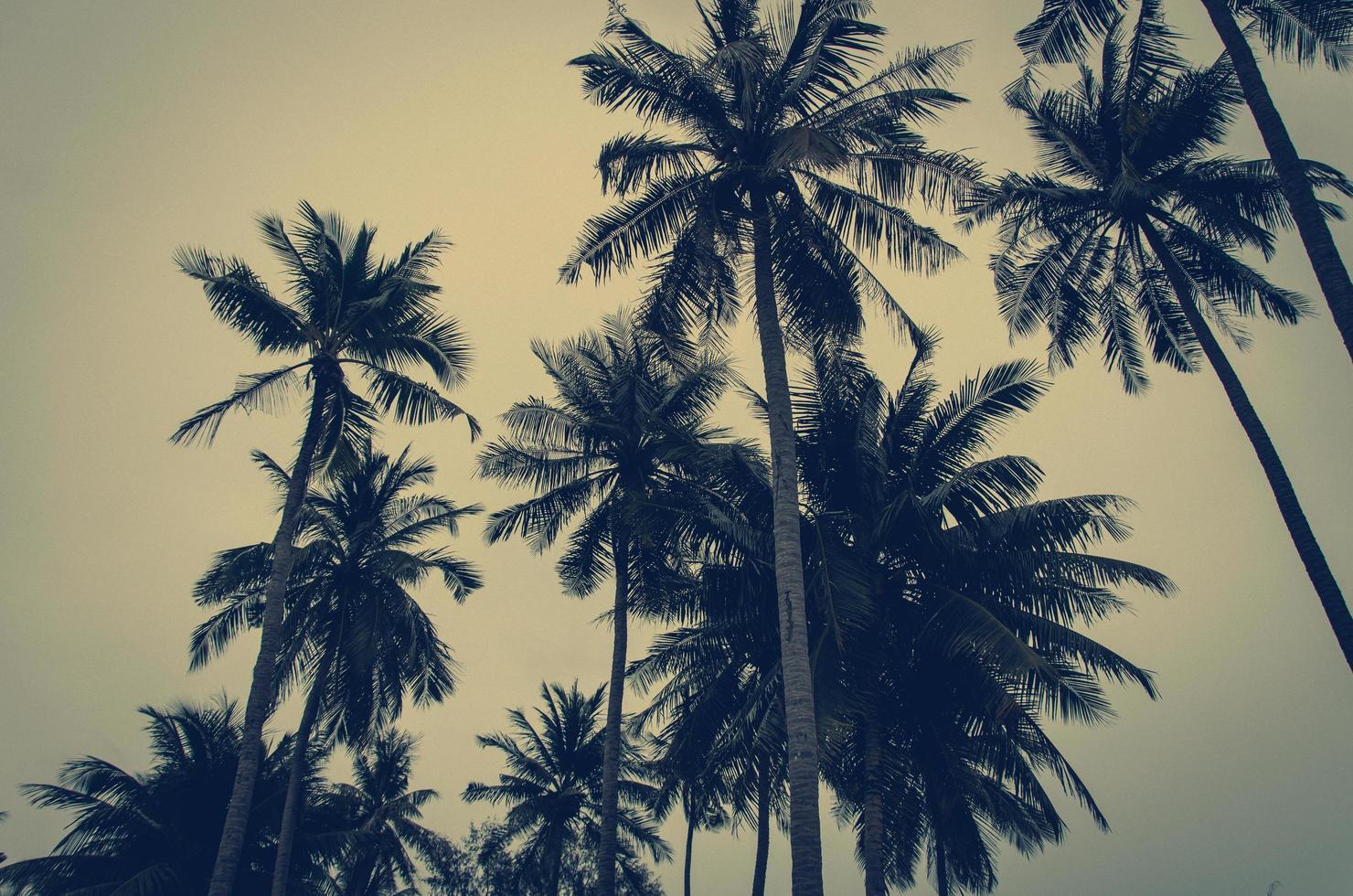 palmbomen onder grijze luchten foto