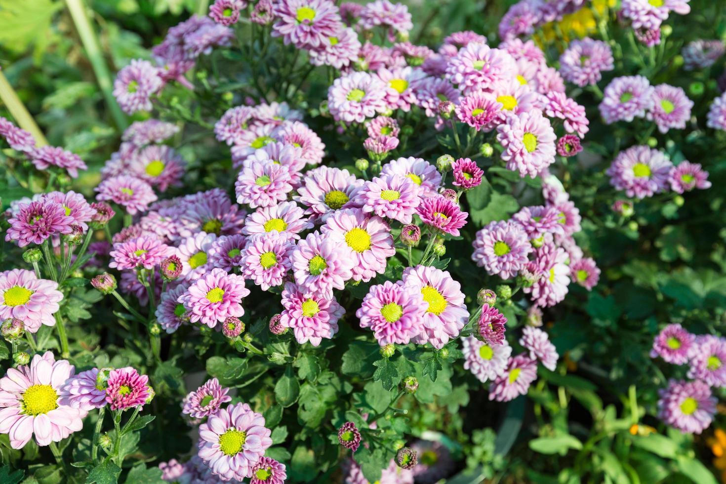 paarse bloemen in het park foto
