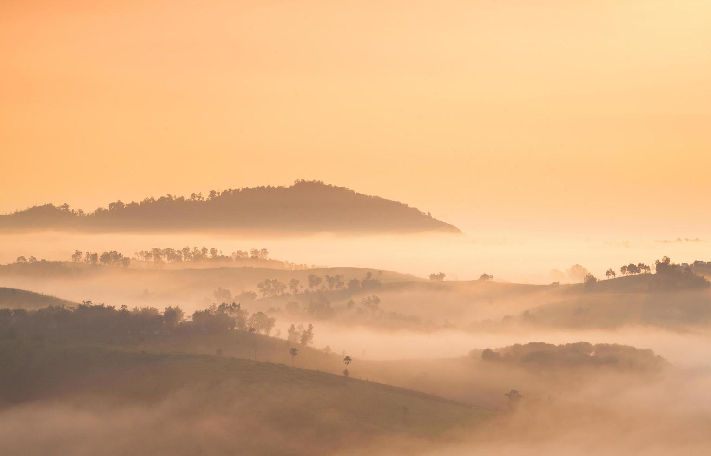 mist bedekte bergen en bos foto
