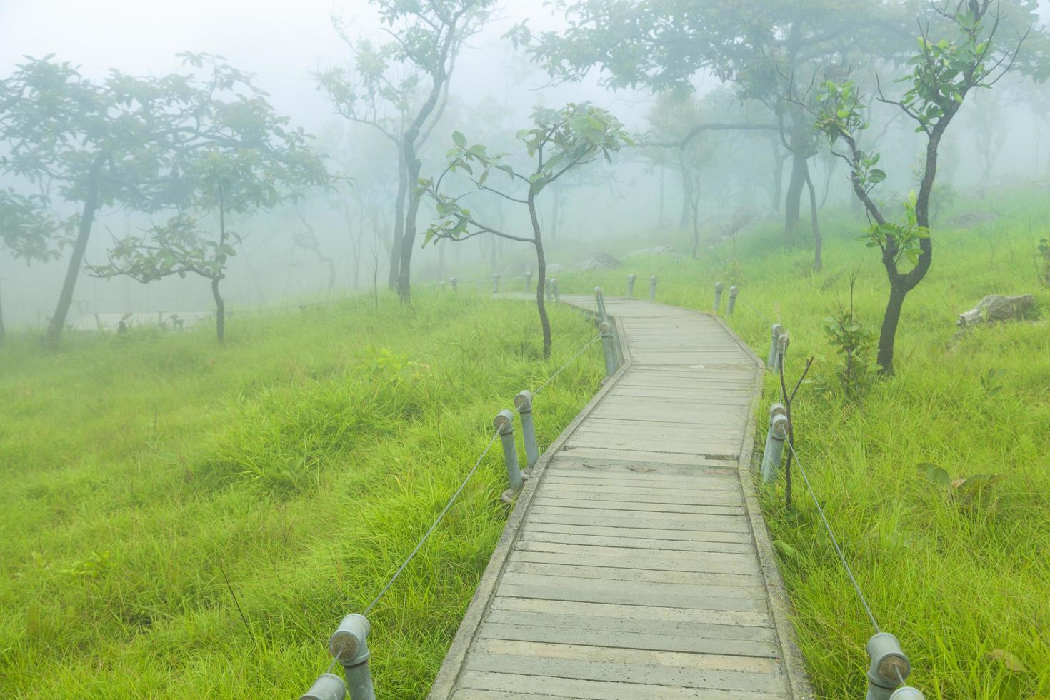 houten loopbrug in het bos foto
