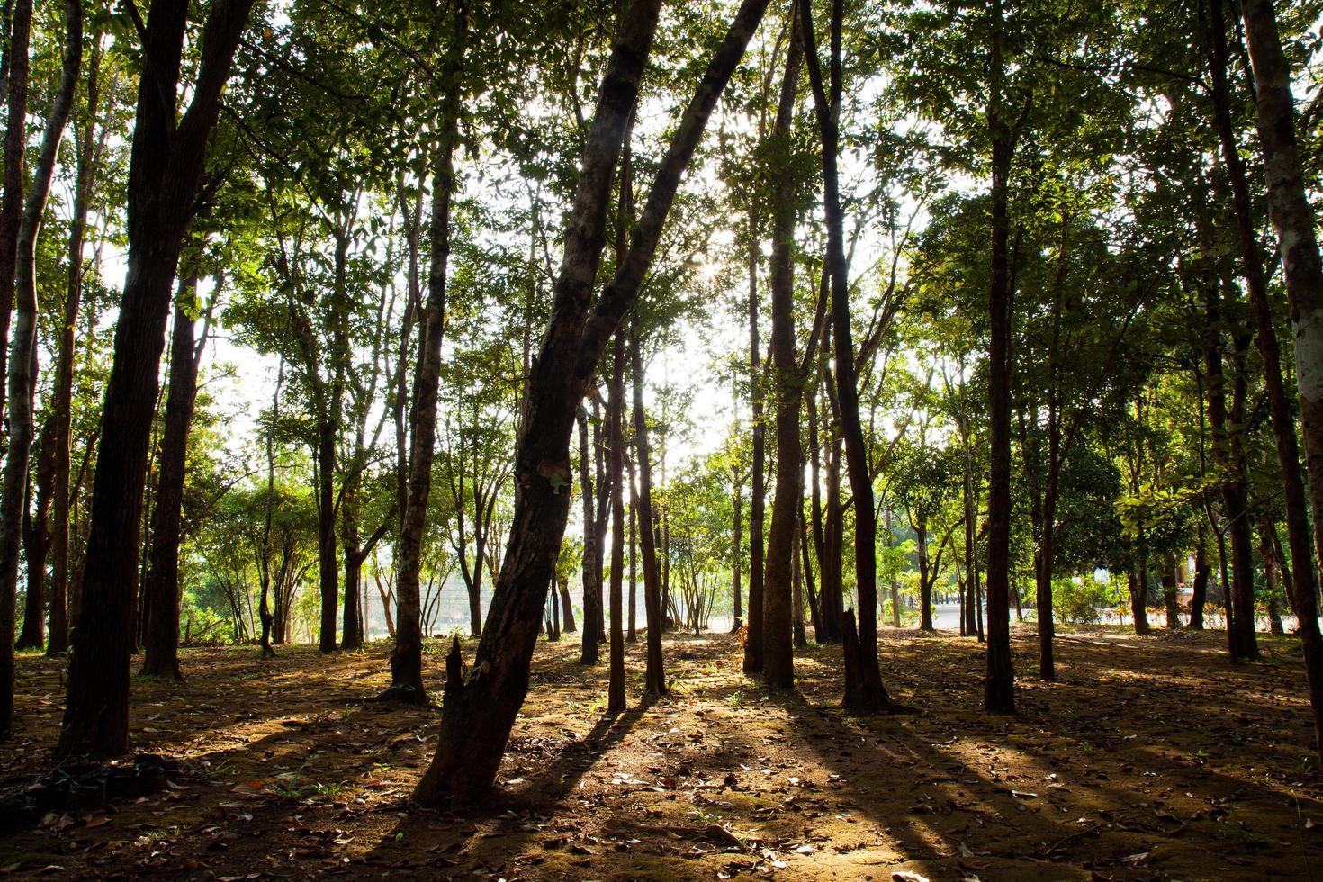 bomen op een heuvel foto