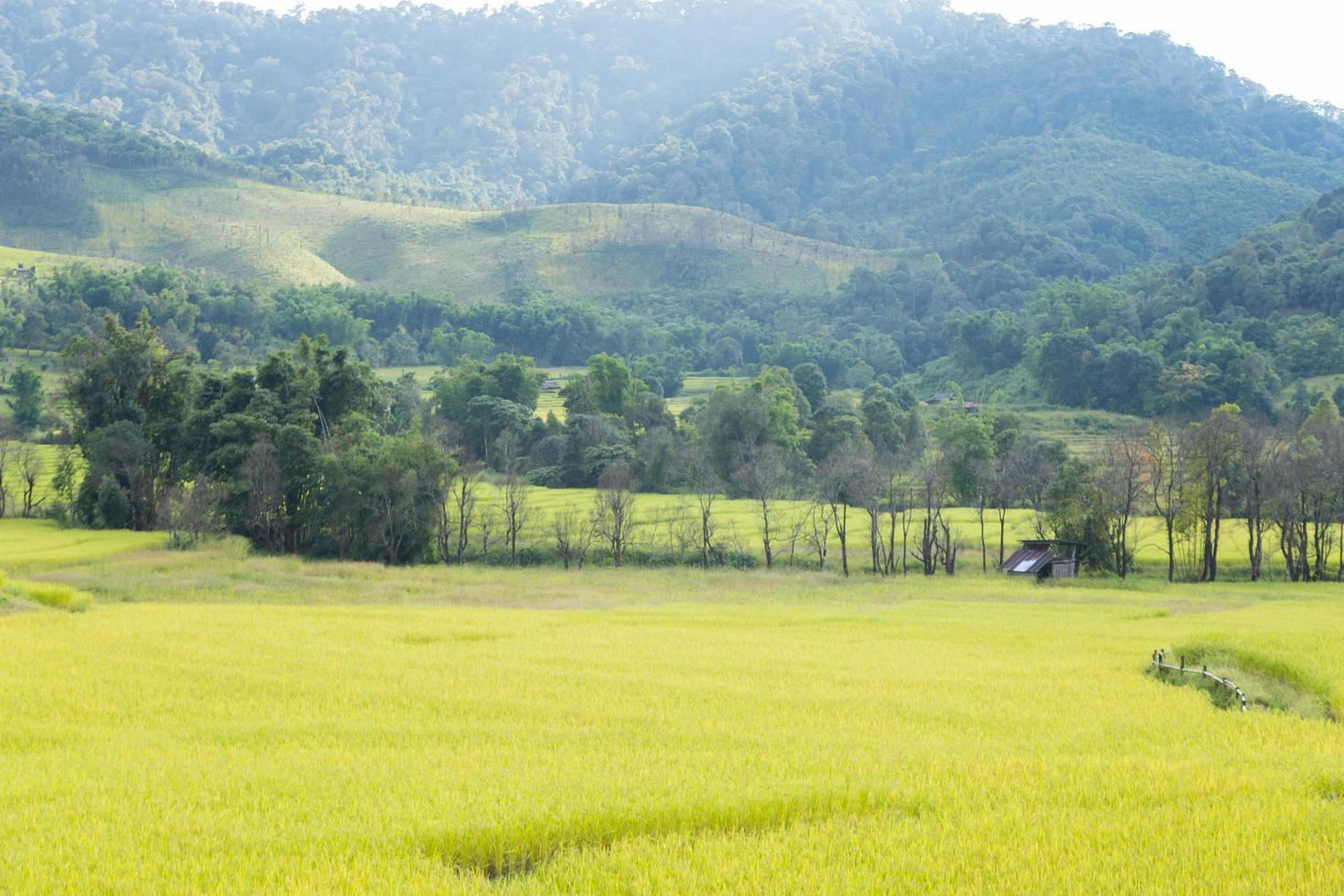 rijstboerderij op de berg in thailand foto