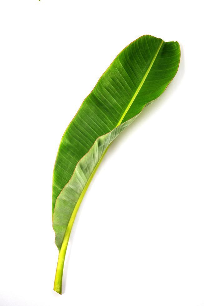 groen bananenblad geïsoleerd foto