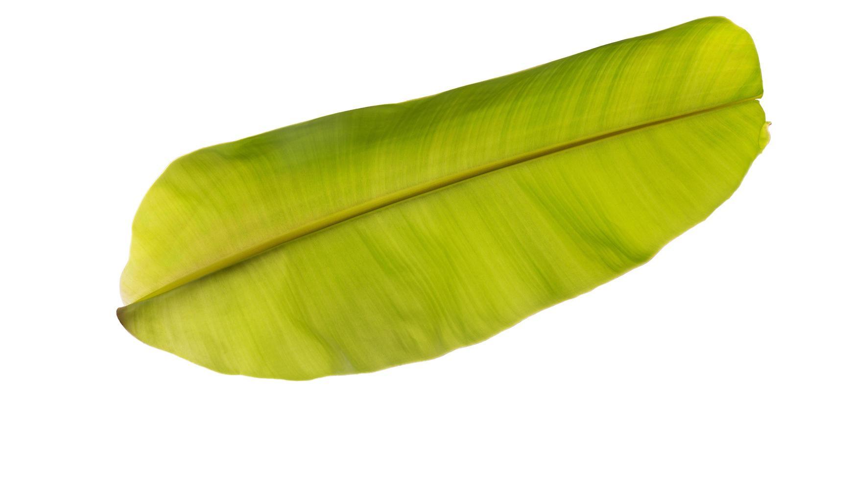 groen bananenblad op wit foto