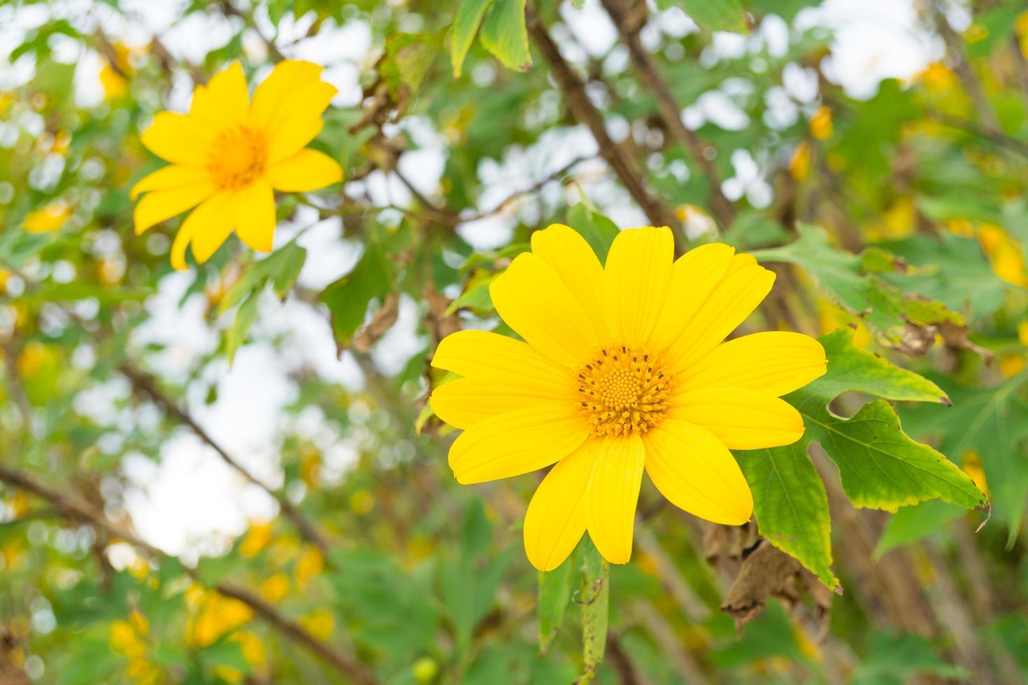 gele bloemen in Thailand foto