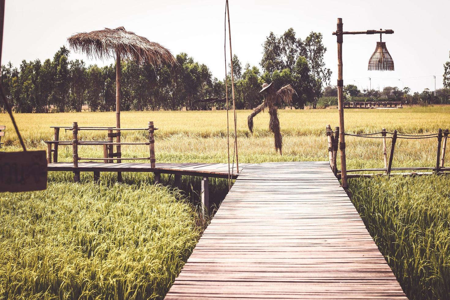 houten brug in het padieveld in Thailand foto