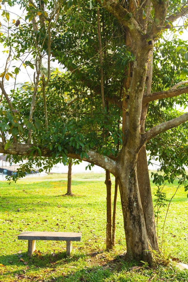 bankje onder een boom foto