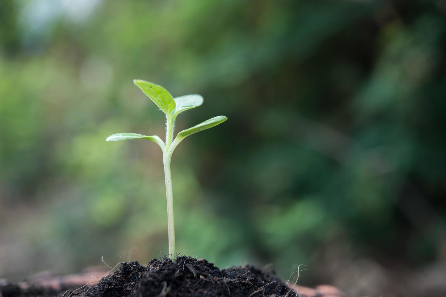 close-up van jonge spruit groeien foto