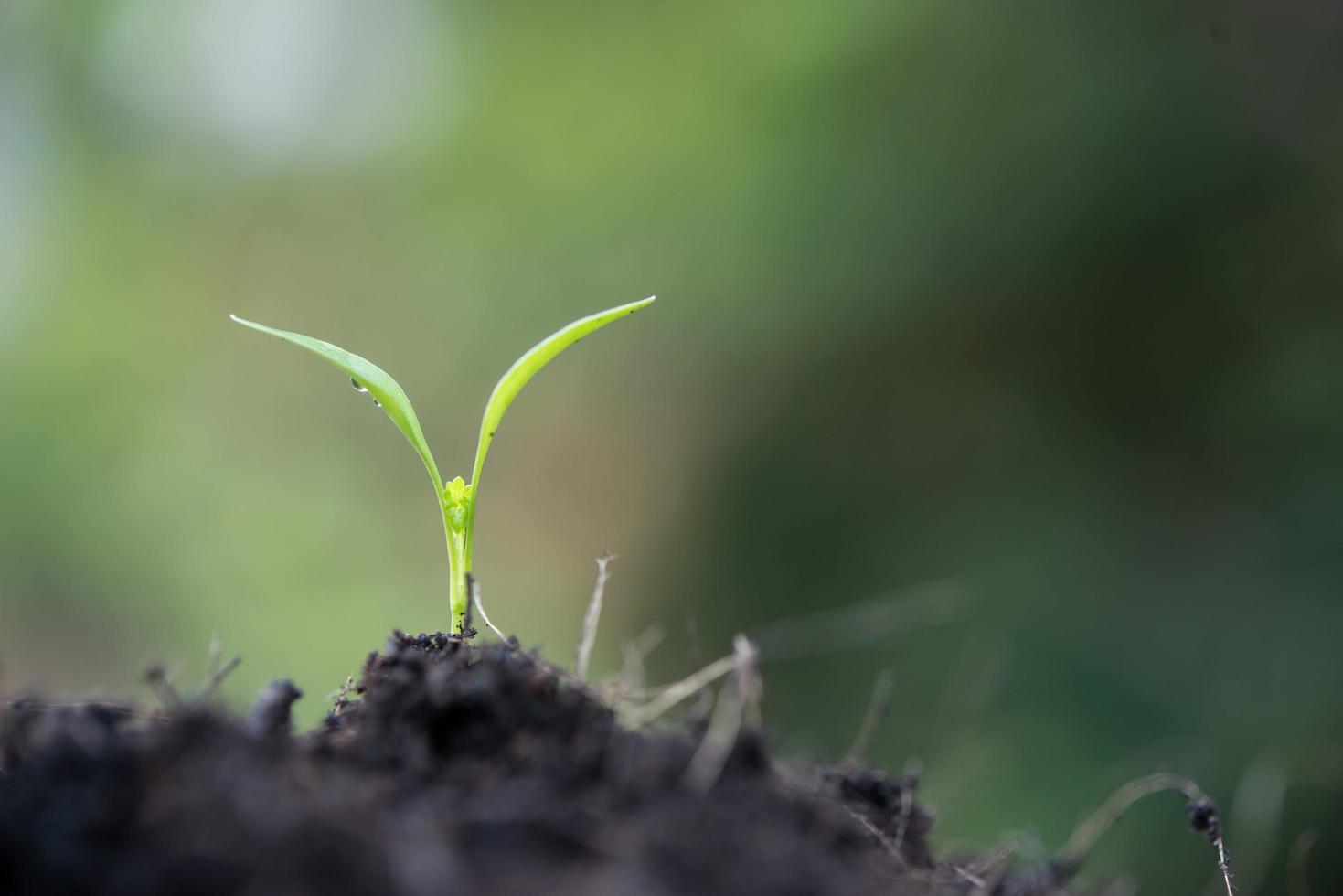 close-up van een jonge spruit groeit foto