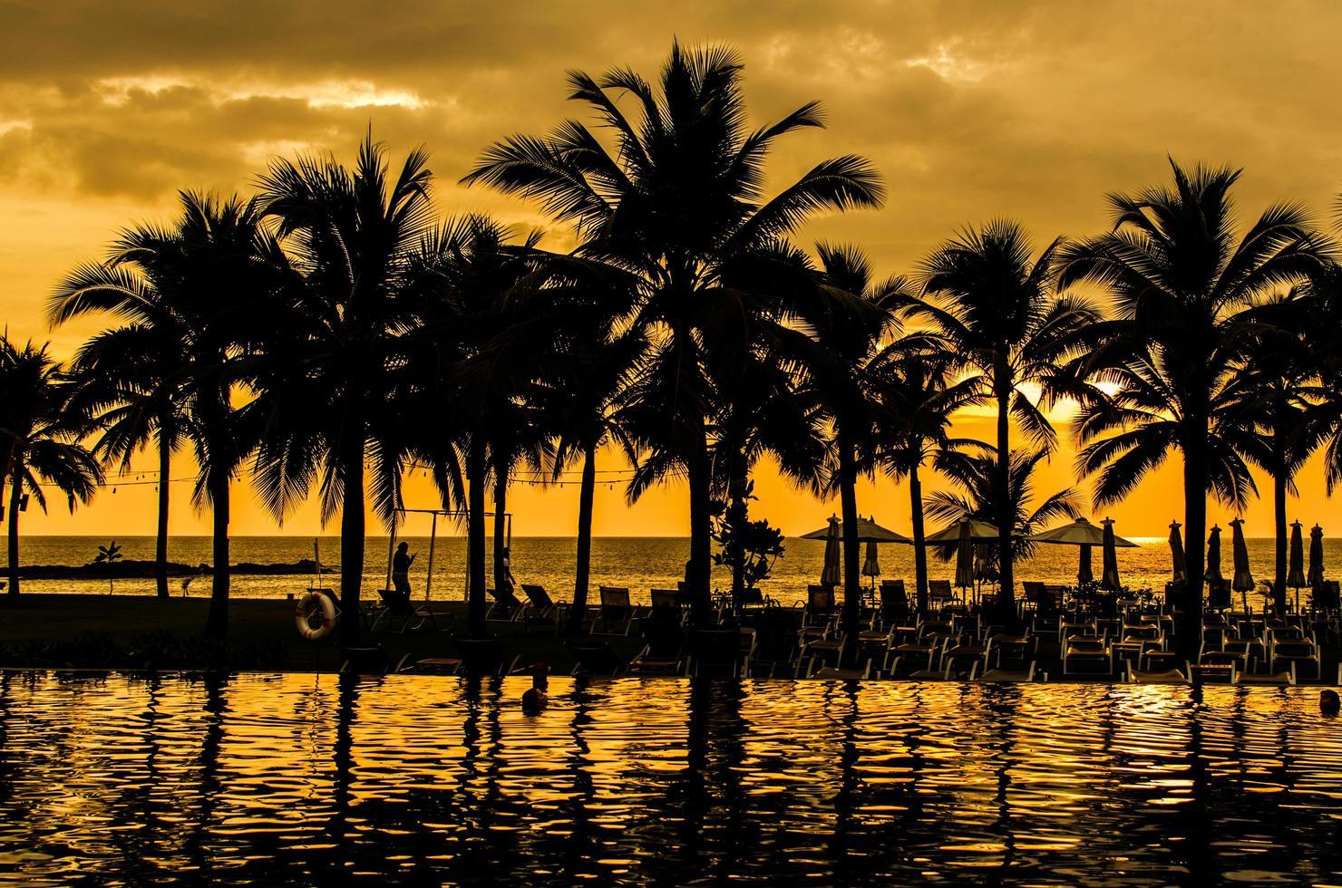 palmbomen silhouetten foto