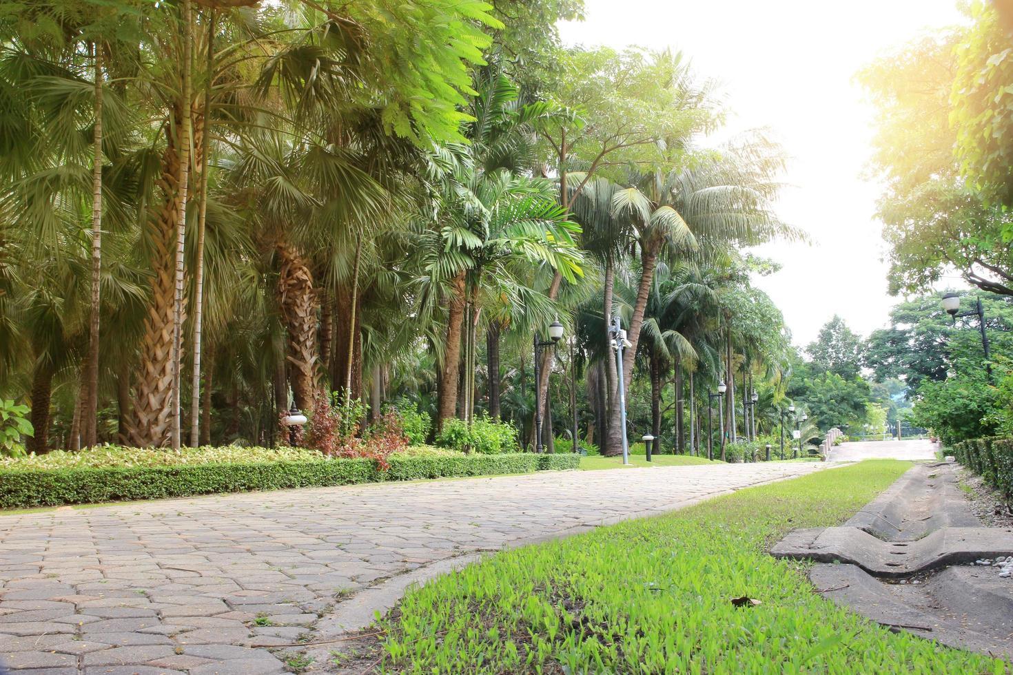 palmbomen in de tuin foto