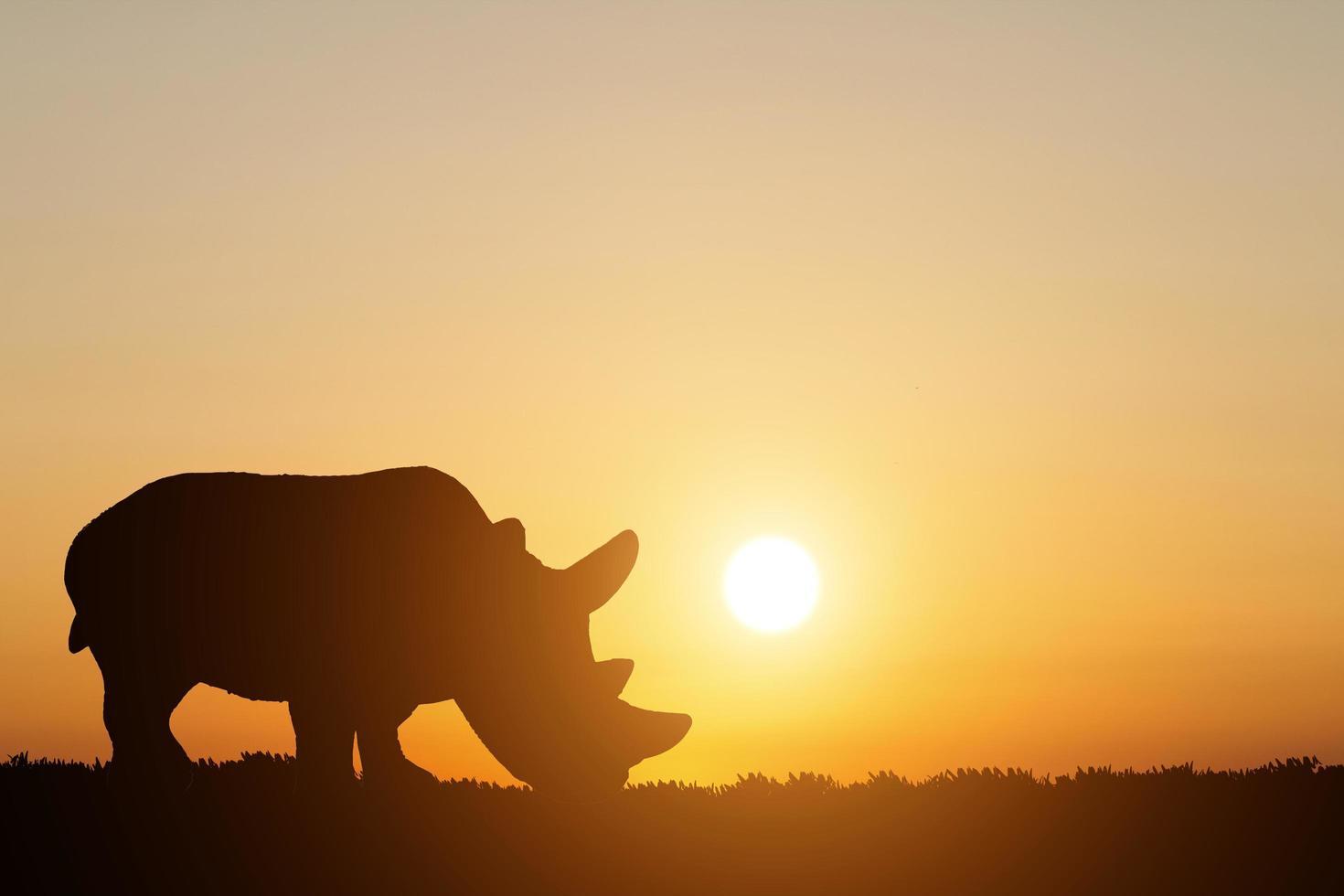 silhouet van een neushoorn op zonsondergang achtergrond foto