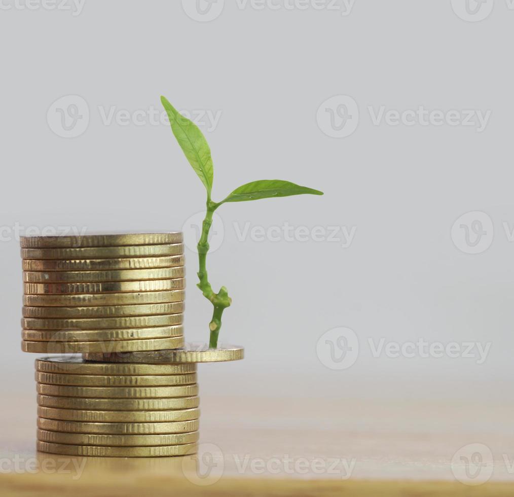 rij van geldmunten met boom groeit foto