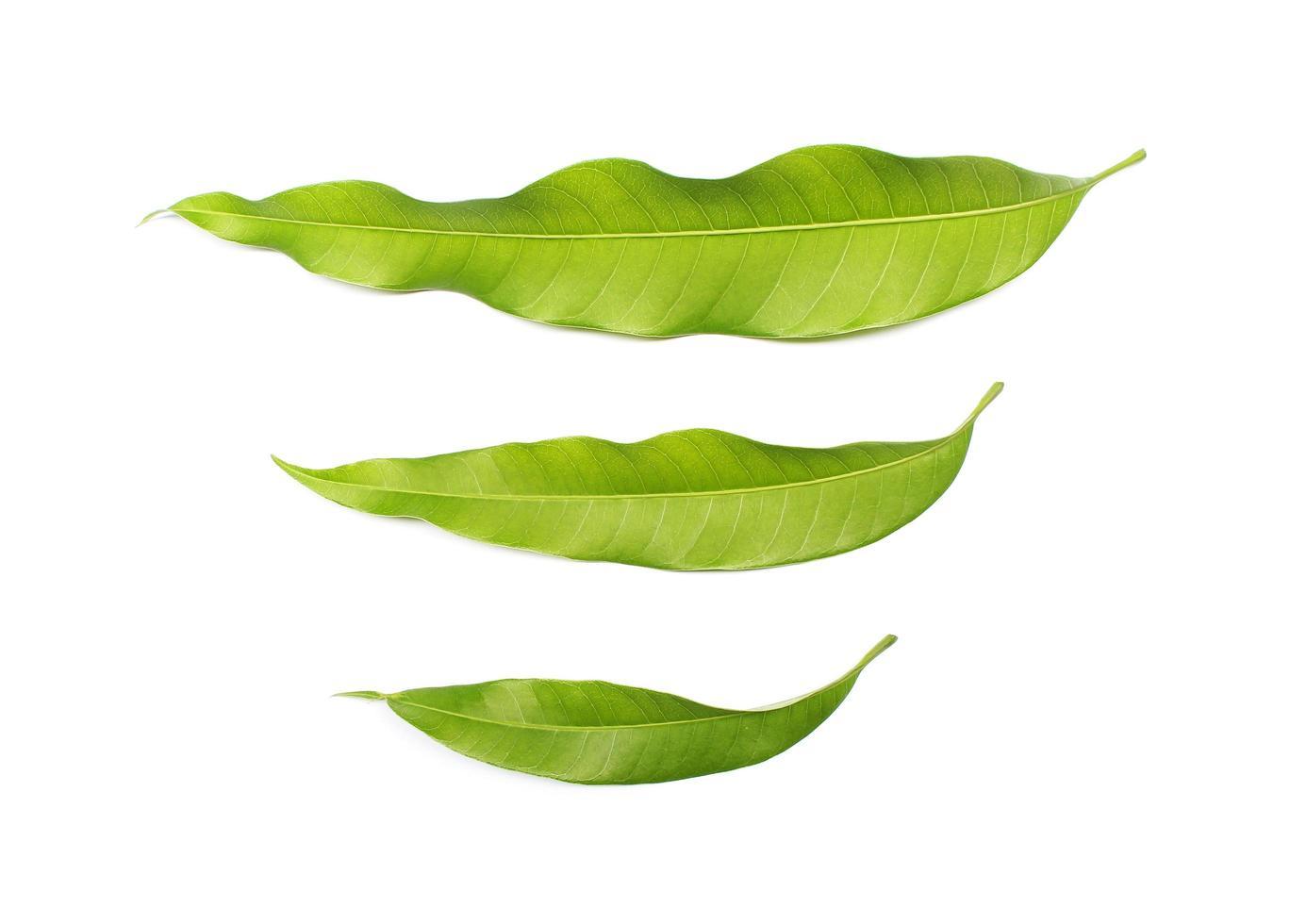 drie groene bladeren foto
