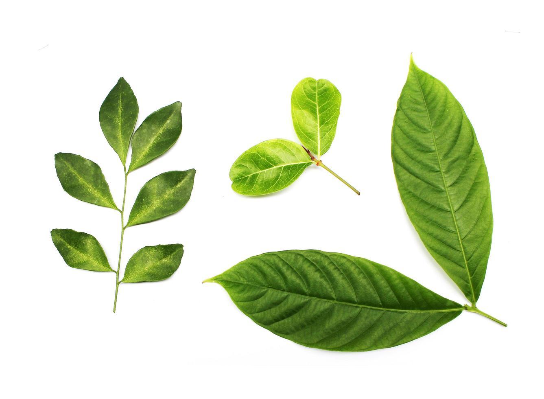 verzameling van verschillende bladeren foto