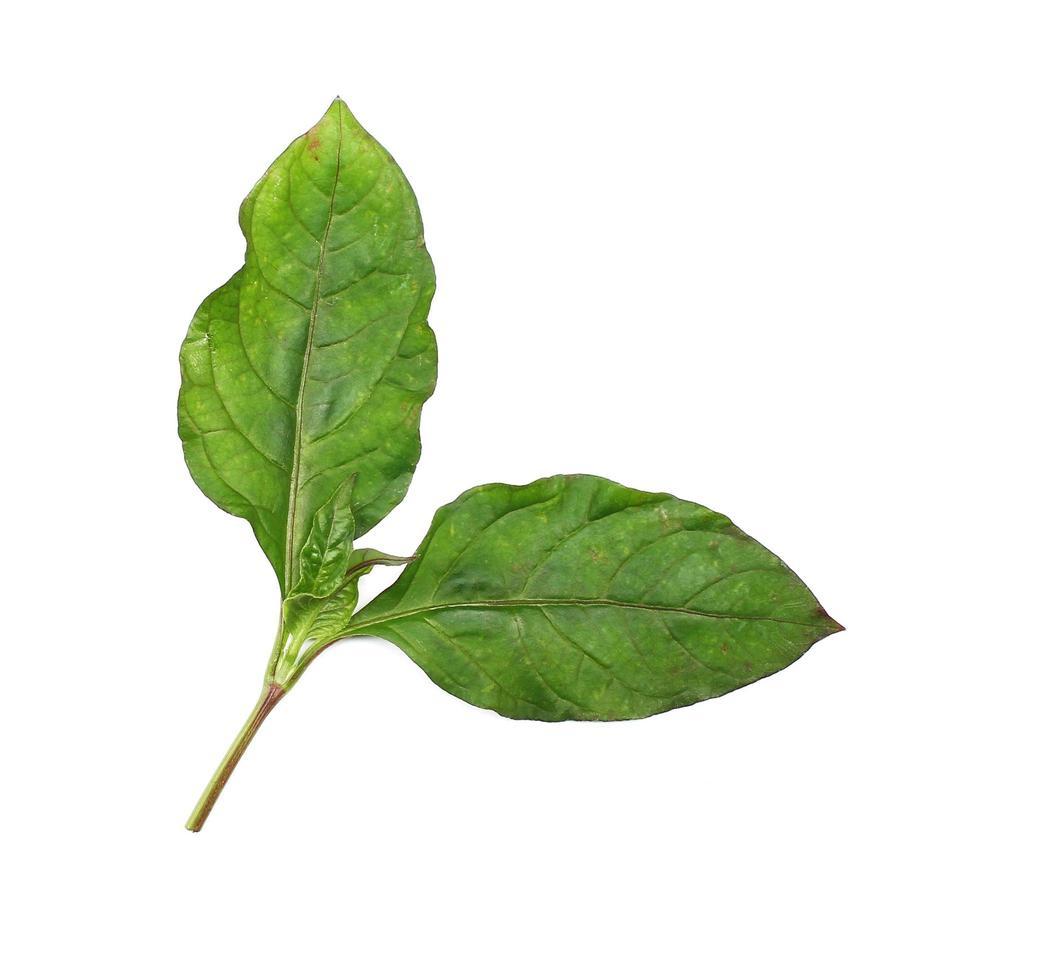 groene bladtak foto