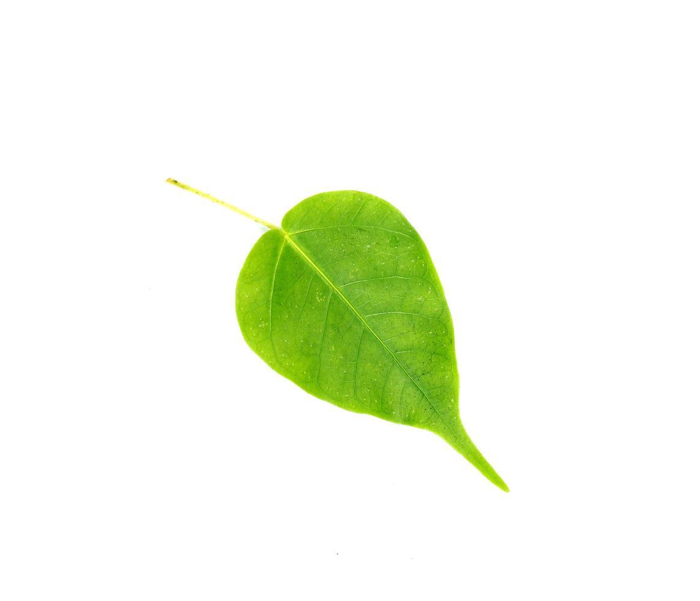 druppel groen blad foto
