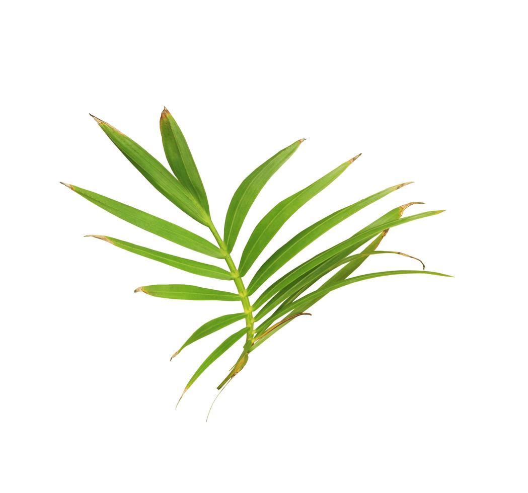 weelderige groene doorbladerde tak foto