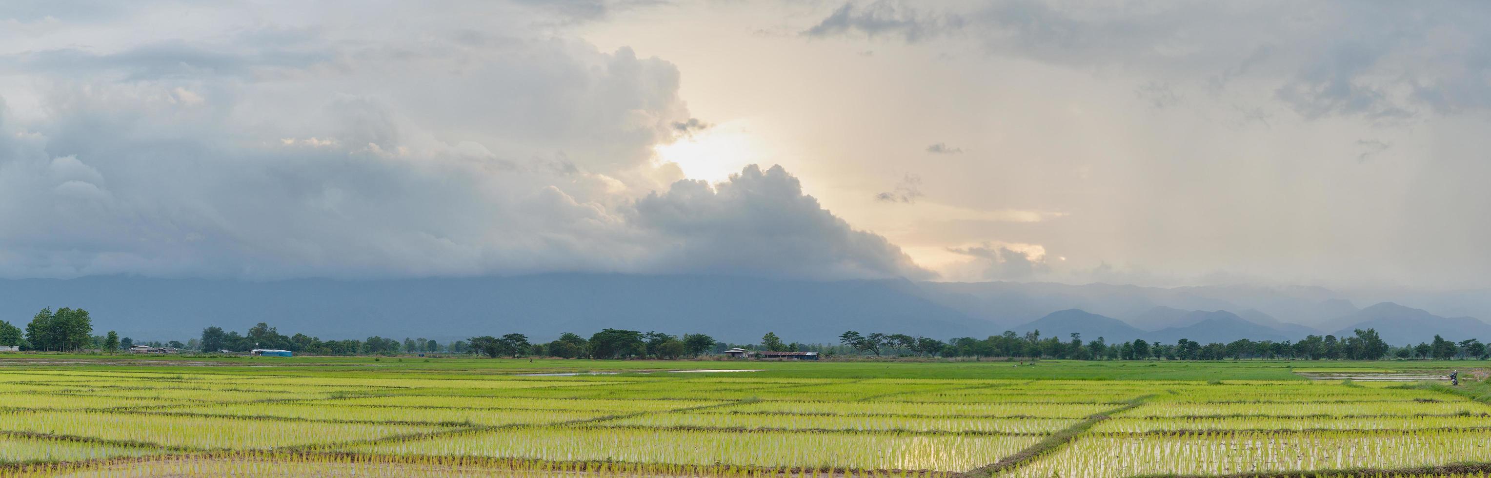 rijstveld bij zonsondergang foto