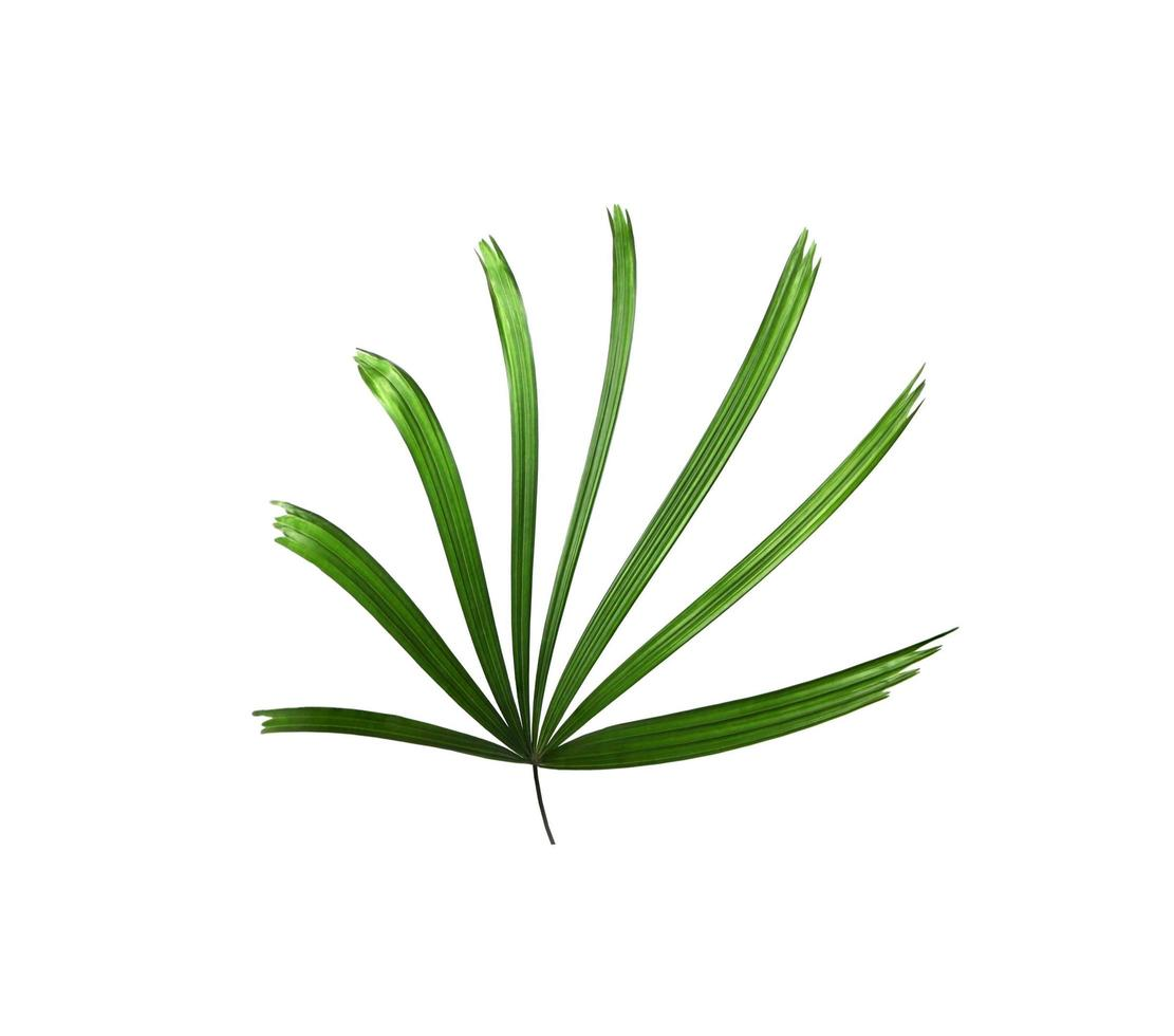 klein palmblad op wit foto