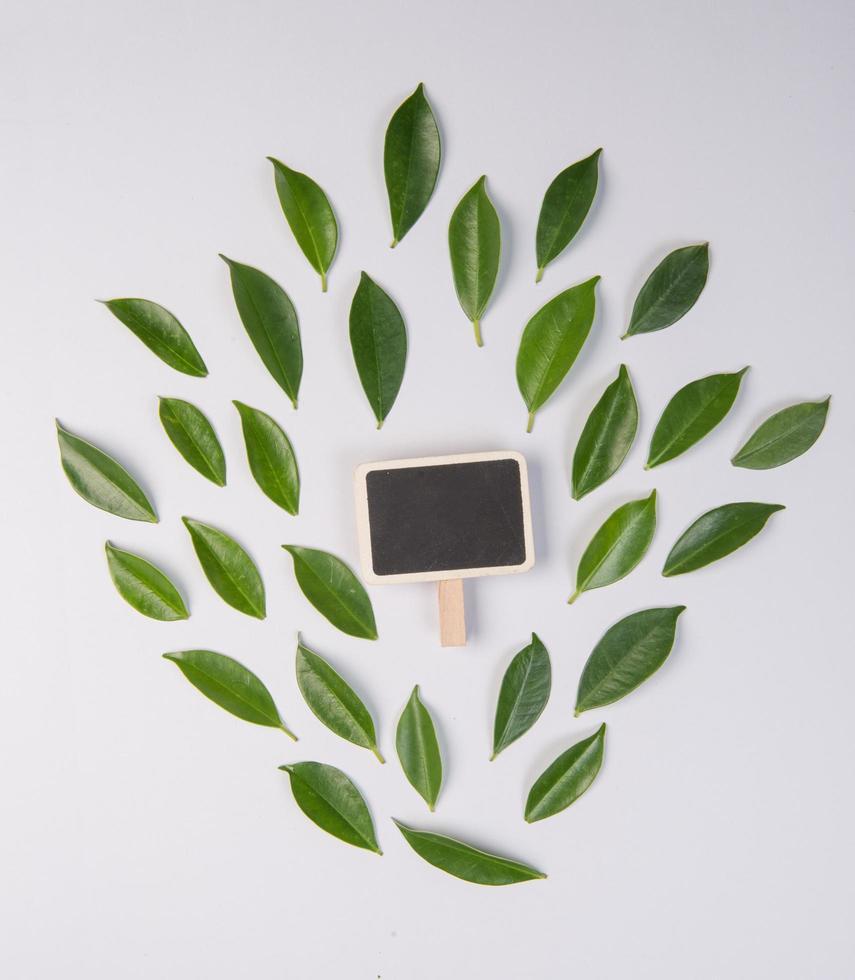 bladeren op witte achtergrond met ruimte voor tekst foto