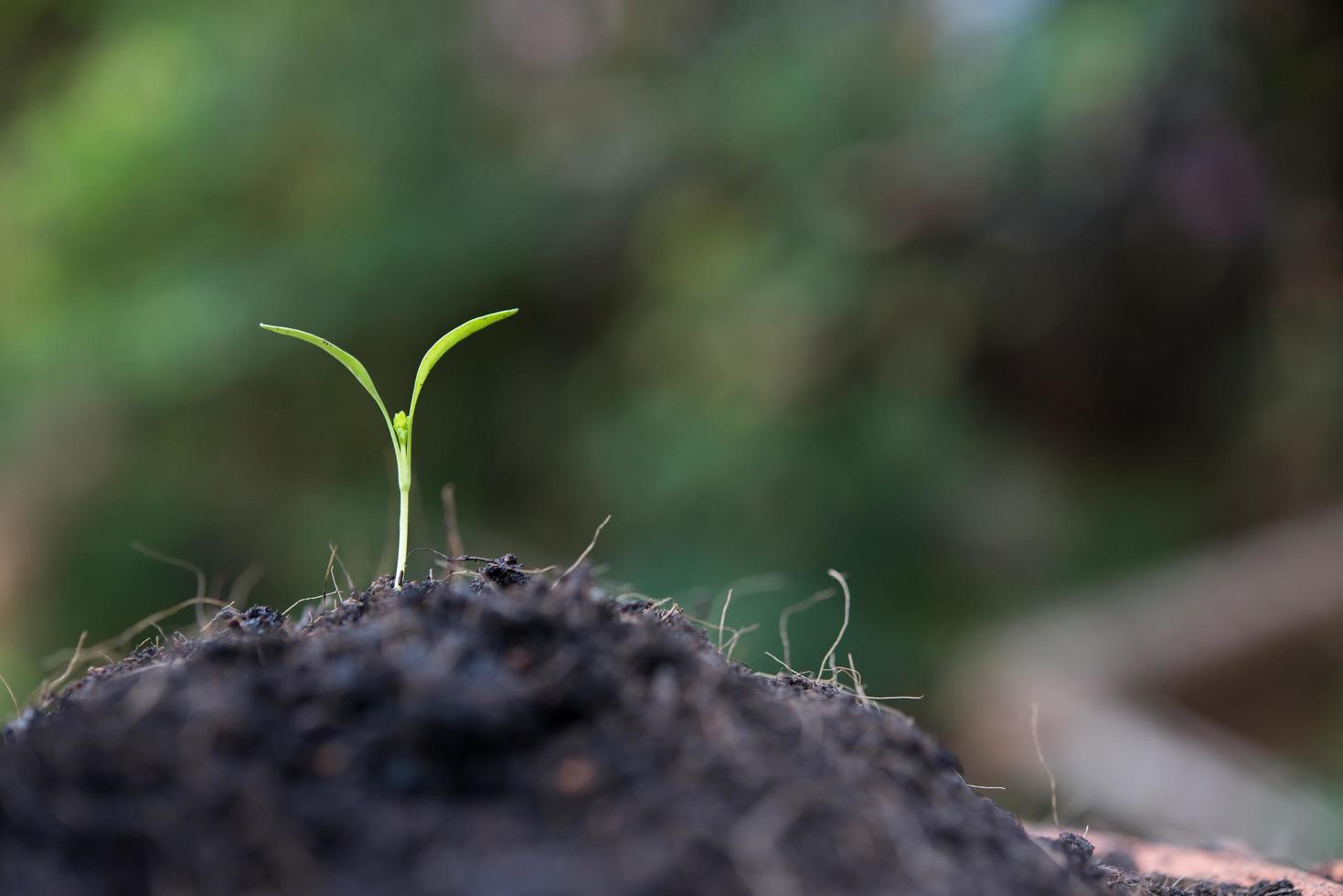 close-up van jonge spruiten groeien foto