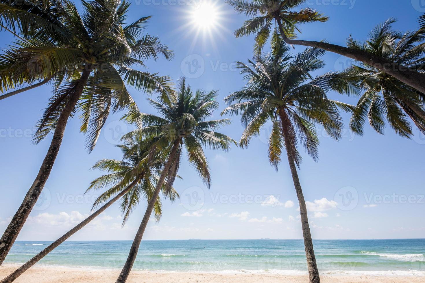 kokospalmen voor de oceaan foto