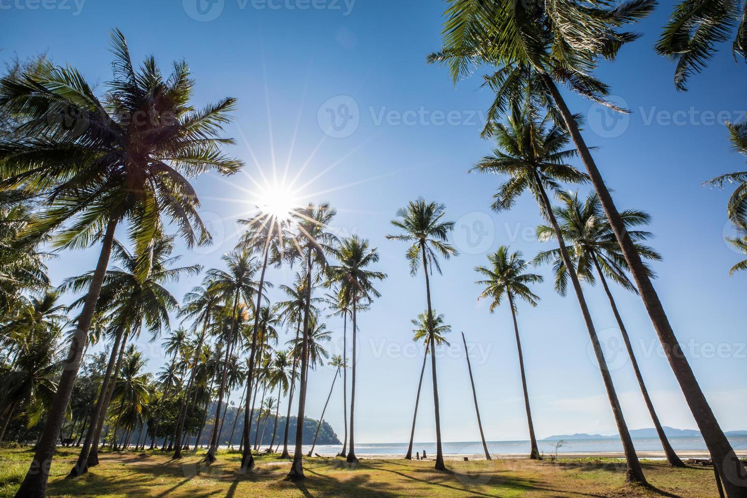 kokospalmen op een strand foto