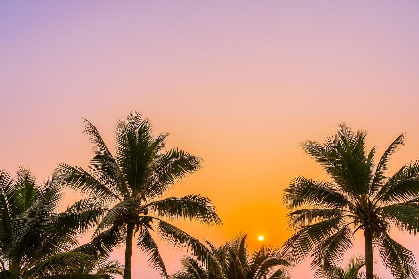 palmbomen aan de oceaan foto