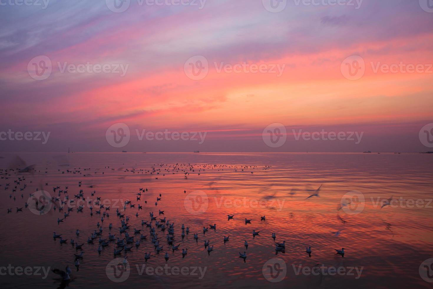 zwerm vogels bij zonsondergang foto