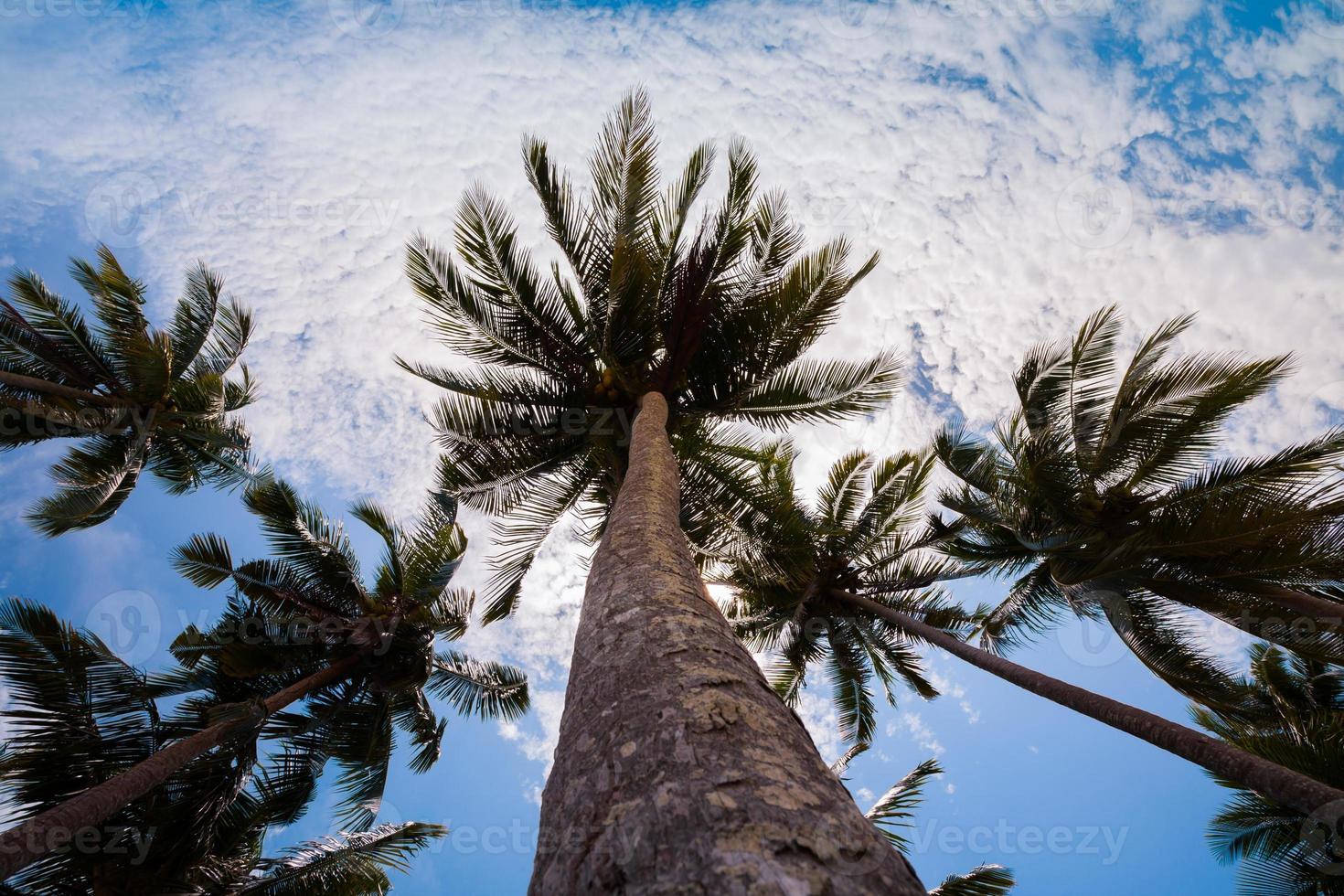 palmbomen in de lucht foto